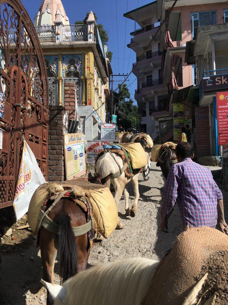 Bhagsu donkeys